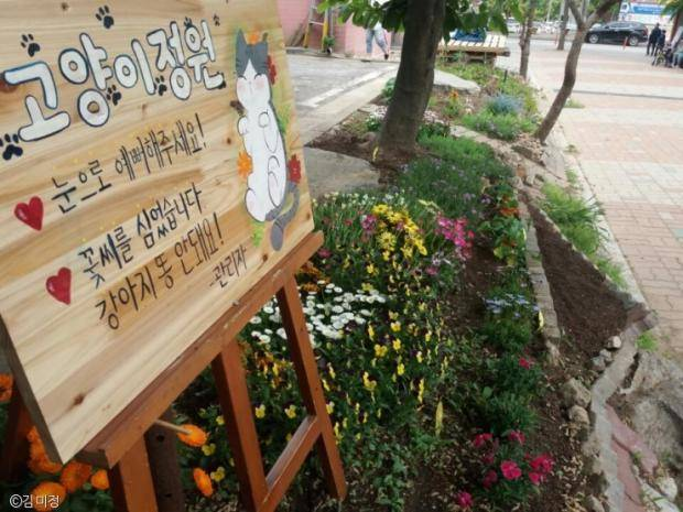 South Korea Travel Animal Cafe Unique Experience Animal Lovers Coffee Kids Cat Kitty Garden Outdoor
