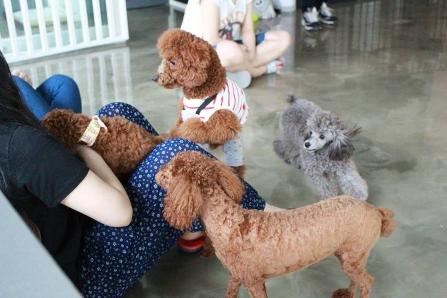 South Korea Travel Animal Cafe Unique Experience Animal Lovers Coffee Kids Dogs Doggy Doggo